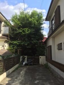 image1 (1) (1)